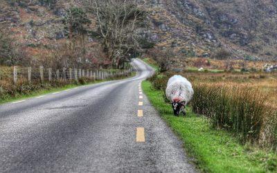 Situación COVID en Irlanda