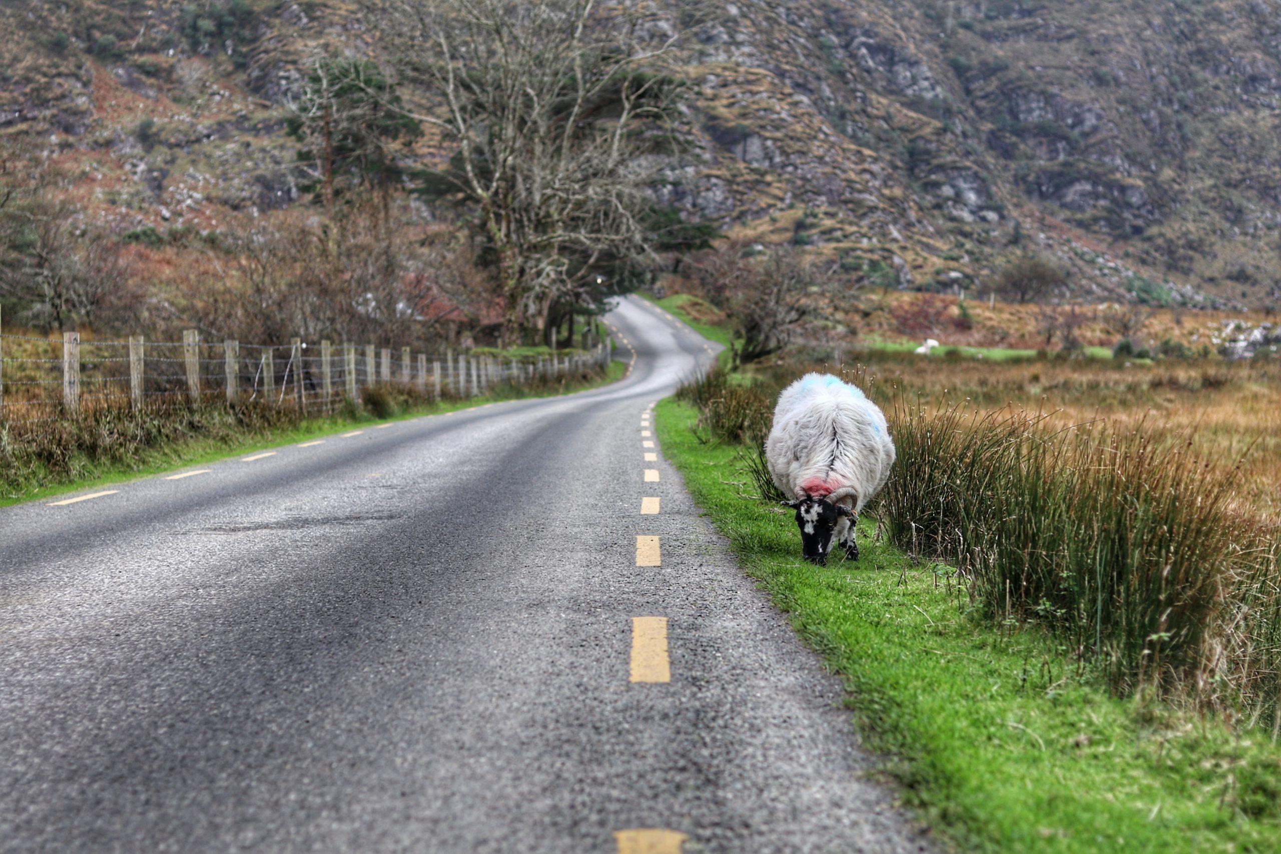 Situacion Covid Ireland
